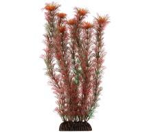 """Растение для аквариума Laguna """"Амбулия"""" красная, 300мм"""