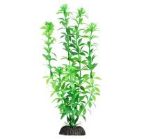 """Растение для аквариума Laguna """"Гемиантус"""" зеленый, 400мм"""