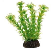 """Растение для аквариума Laguna """"Амбулия"""" жёлто-зеленая, 100мм"""