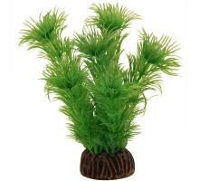 """Растение для аквариума Laguna """"Амбулия"""" зеленая, 100мм"""